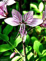 Blume001